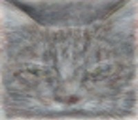 Cat Detection
